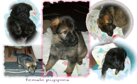 Female Pups